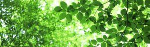 緑の葉っぱと木漏れ日