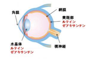 目の栄養素 MDOP値